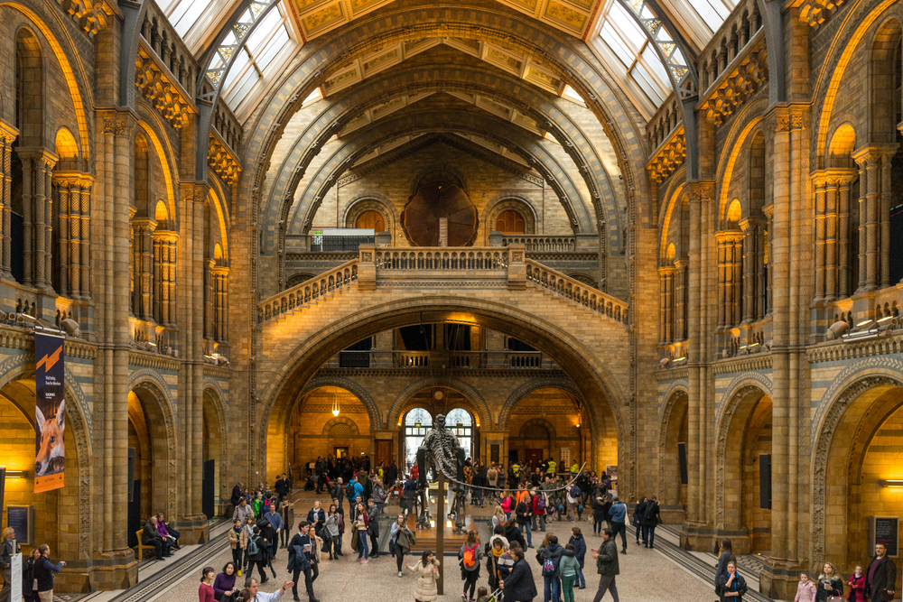 View Of Natural History Museum